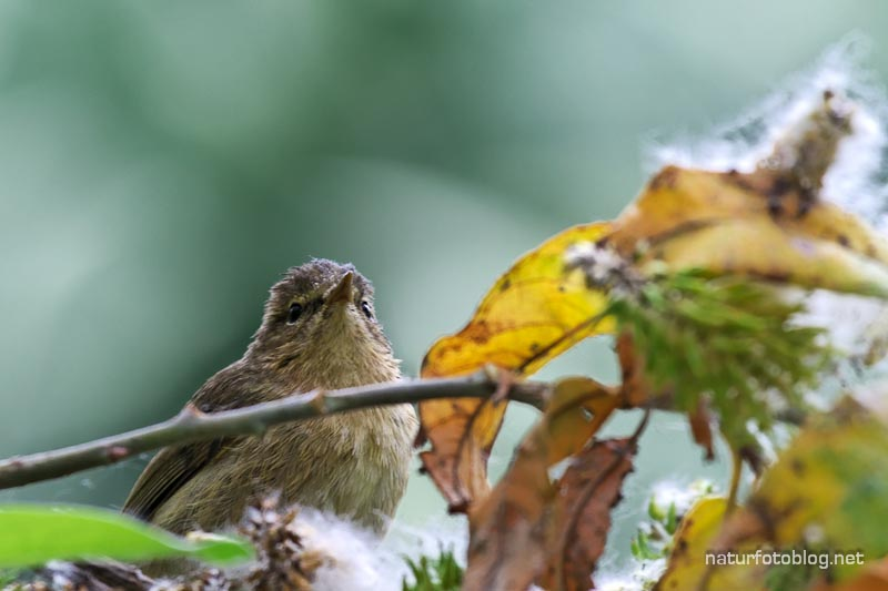 Teneriffa: Ein paar (kleine) Vögel