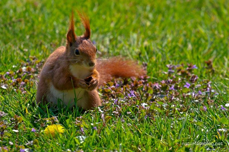 Eichhörnchen zu Gast
